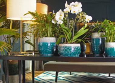 Indoor Ceramic