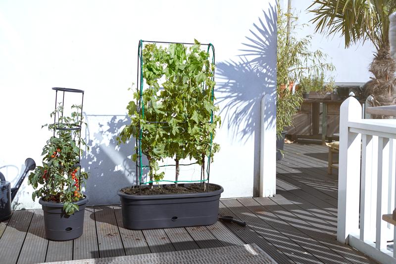 Elho 2019 Green Basics Veggie Wall 80 cm