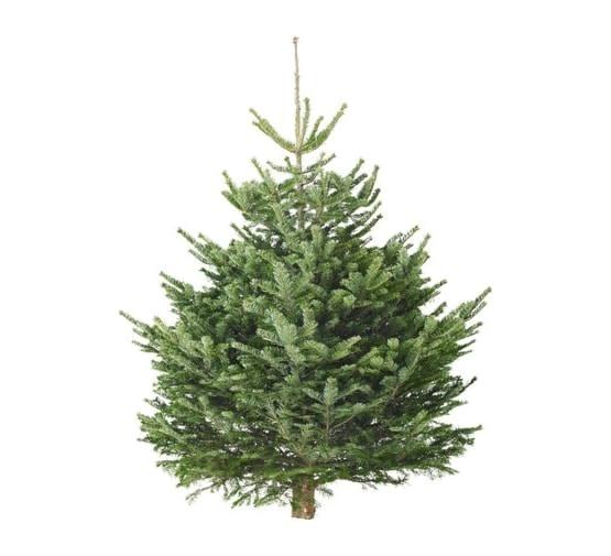 Kerstboom Nordmann gezaagd  hoogte tussen 100-125 cm