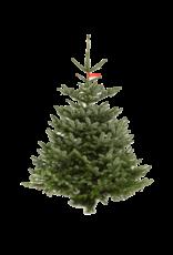 Kerstboom Nordmann gezaagd hoogte tussen 150 - 175 cm
