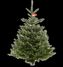 Kerstboom Nordmann pot gekweekt 200/250