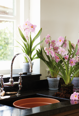 Elho2021 Green Basics Orchidee transparant
