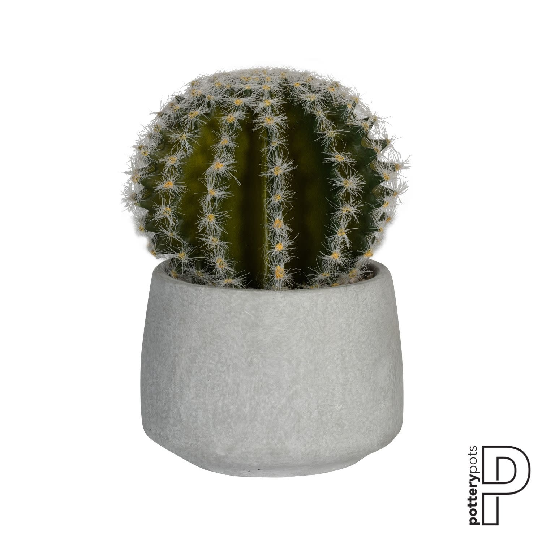 PotteryPots 2021 Cactus in cement pot