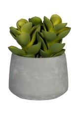 PotteryPots 2021 Succulent in cement pot