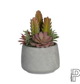 PotteryPots 2021 Mixplants in cement pot