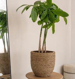 Pottery Pots Cody Straw Grass