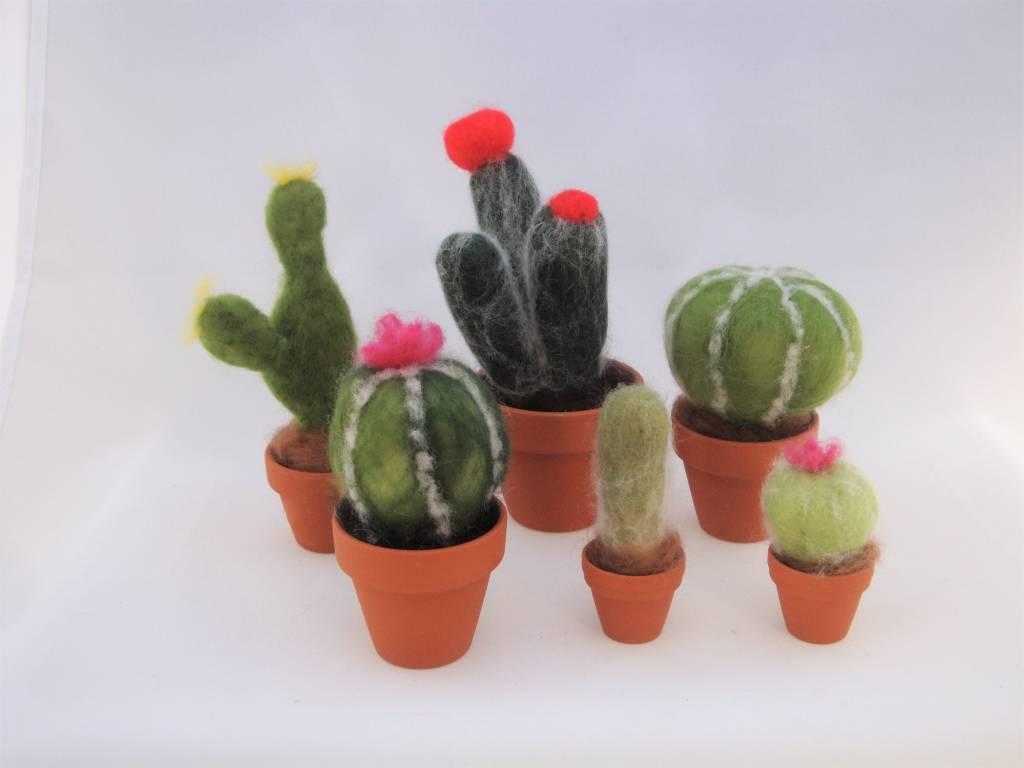 De Wolshoop Cactus maat 1