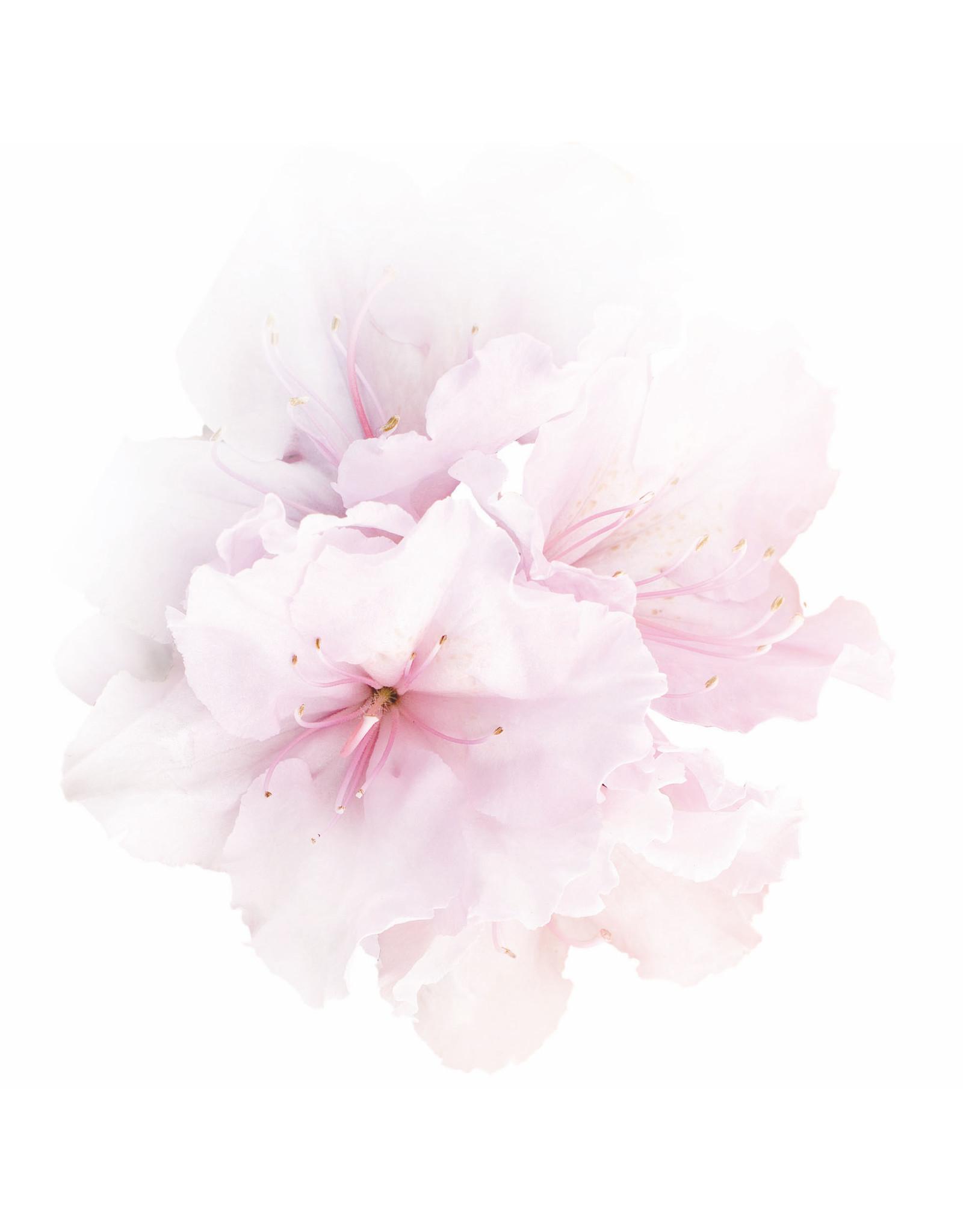SOTHYS Gommage ressourcant - Fleur de cerisier et lotus - Sothys