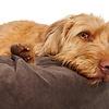Hundebett Pouf - Polster Braun