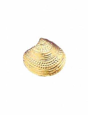 Stud Oorbellen Shell (per stuk)