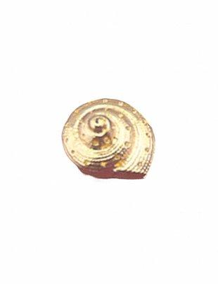 Stud Oorbellen Snailshell (per stuk)