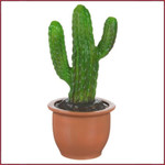 Cactus in pot Lamp LED western model