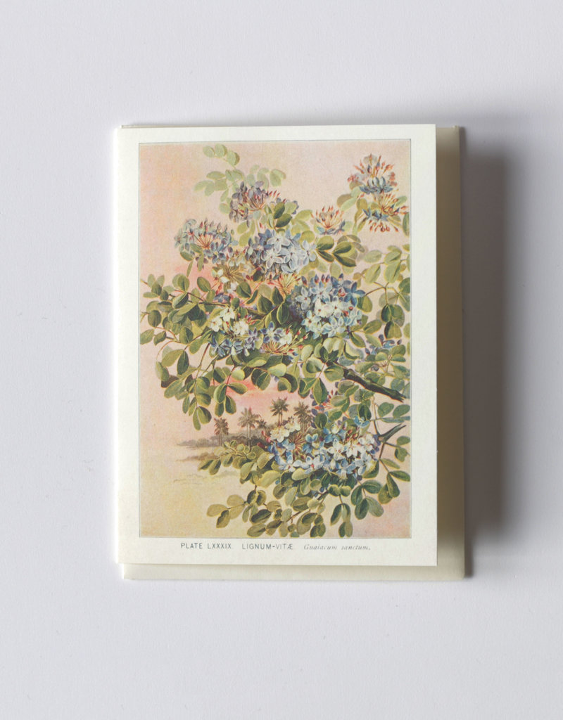 . ILLUSTRATED GREETING CARD