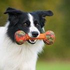 Major Dog Dog Toy Small Barbell