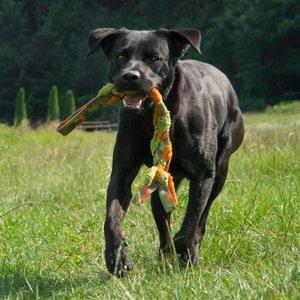 Major Dog Hondenspeelgoed Braid
