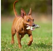 Major Dog Hondenspeelgoed Klein Bot