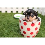 Producten voor puppy's en jonge honden