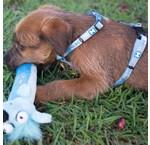 Puppy tuig & Puppy harnas