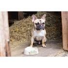 Beco Pets Drinkbak of voerbak Beco Bowl Wit