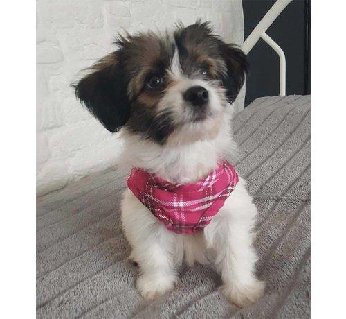 Doxtasy Comfy Dog Harness Scottish Hot Pink