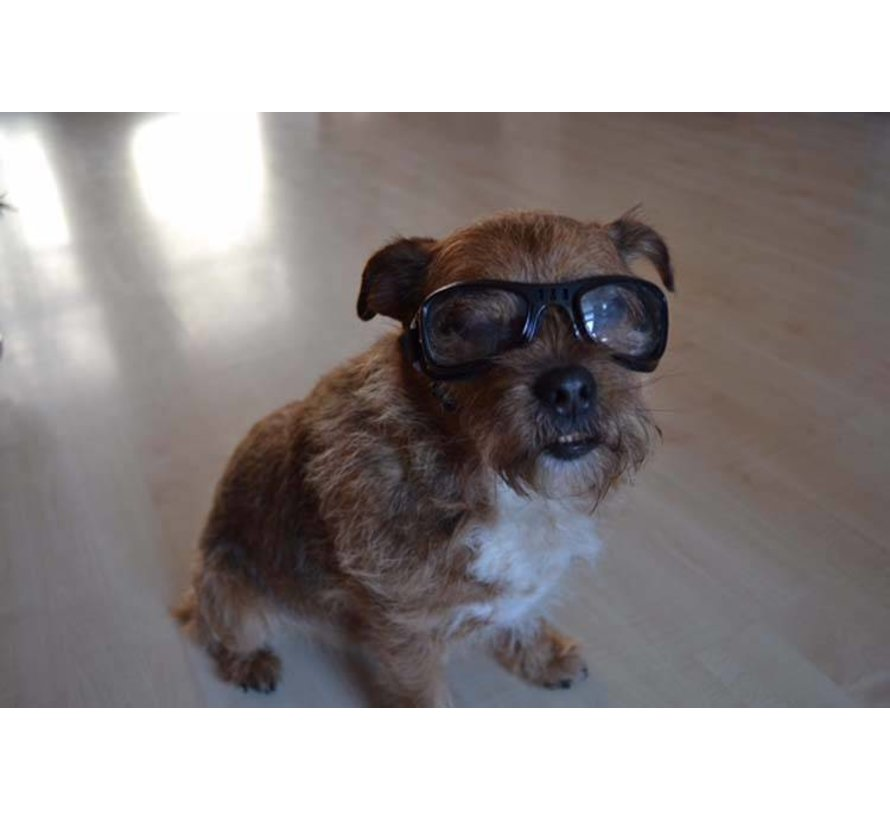 Dog Sunglasses Biker Black Frame Clear Lens