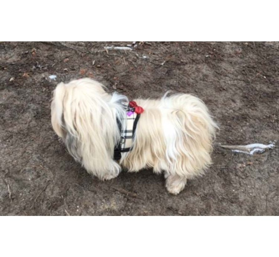 Survival dog harness Scottish Beige