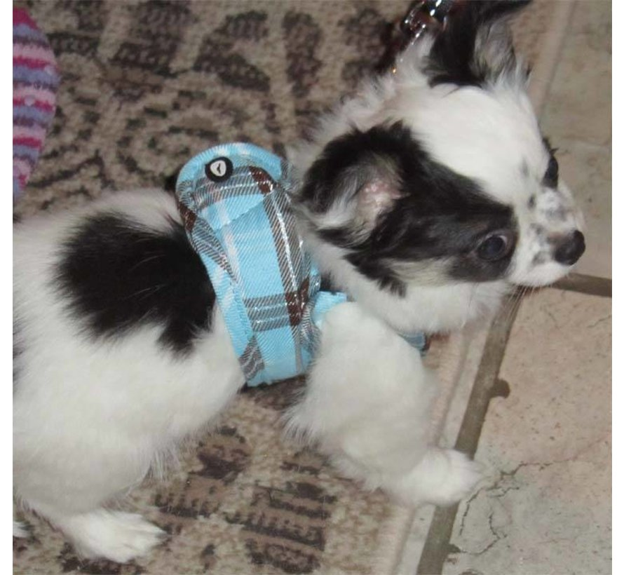 Comfy Dog Harness Scottish Turquoise
