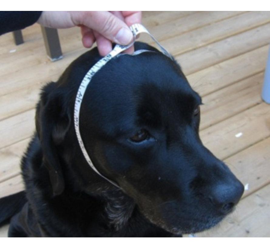 Dog Hat Blue
