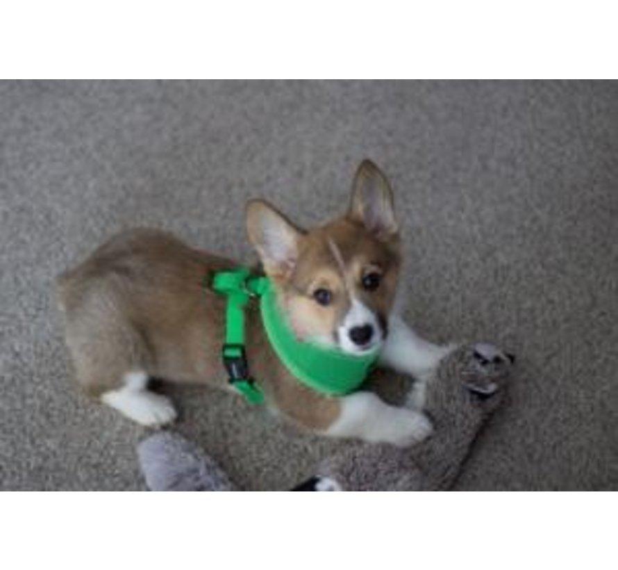 Soft Dog Harness Green