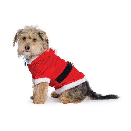 Speciale kerstproducten voor de hond