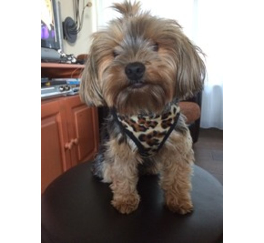 Comfy Harness Leopard Brown