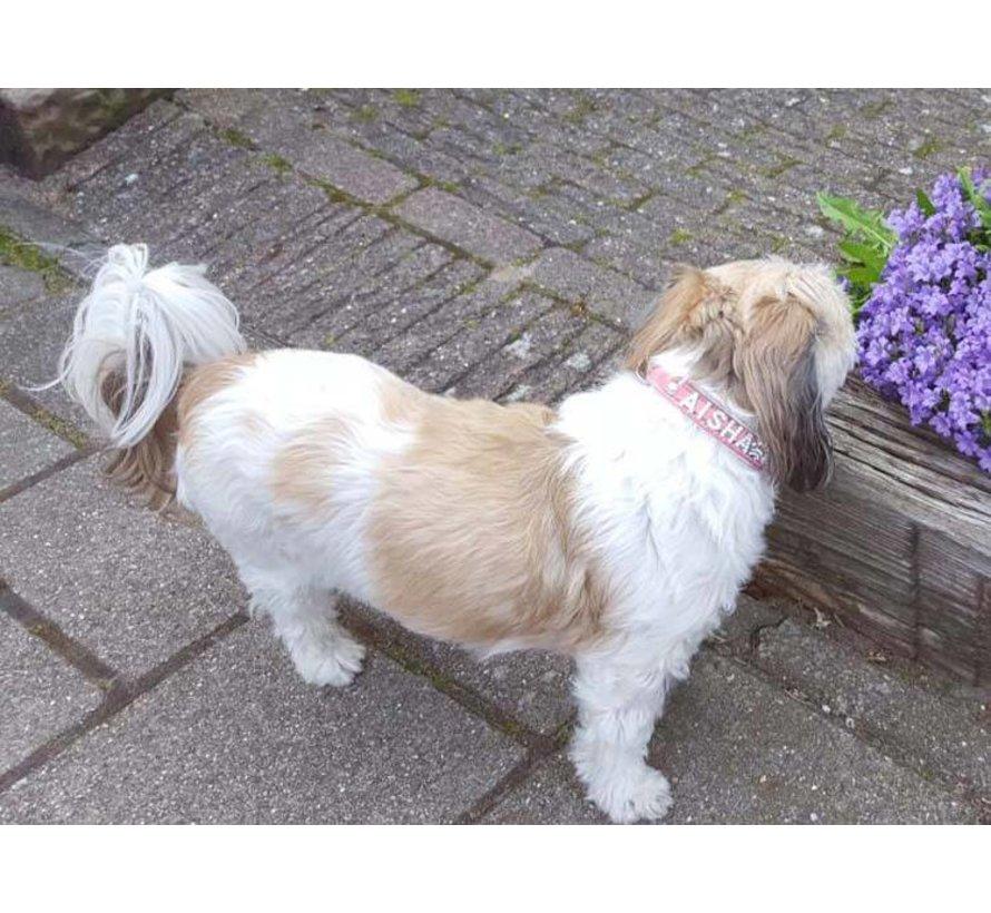 Dog collar with name Medium Pink