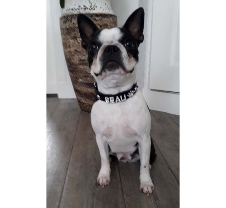 Dog collar with name Medium Black