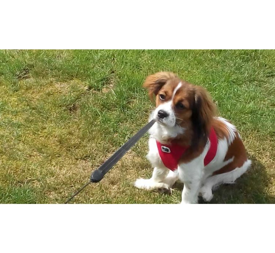 Dog Harness Air Mesh Red