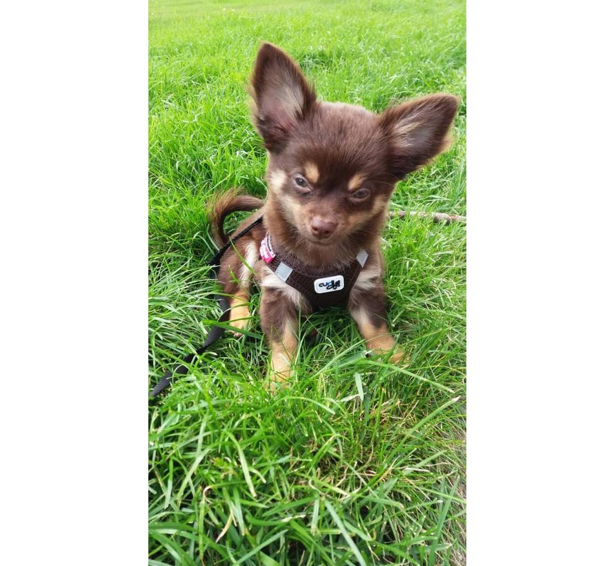 Dog Harness Air Mesh Brown