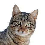 Katten accessoires