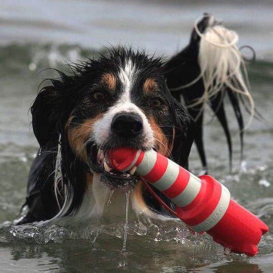 Hondenspeelgoed Vuurtoren