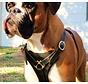 Dog Harness Dean's Choice