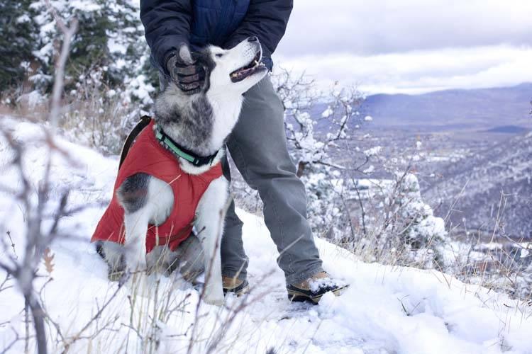 Hondenjas Jacket Loft Rood / Grijs