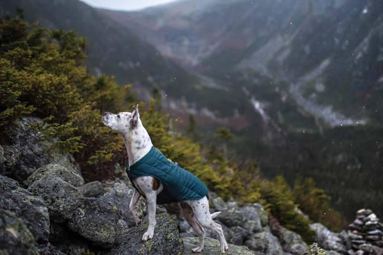 Hondenjas Jacket Loft Blauw / Turquoise