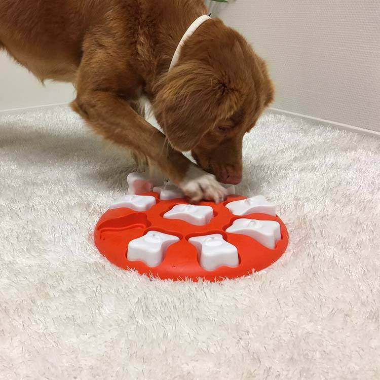 Hondenpuzzel Dog Smart