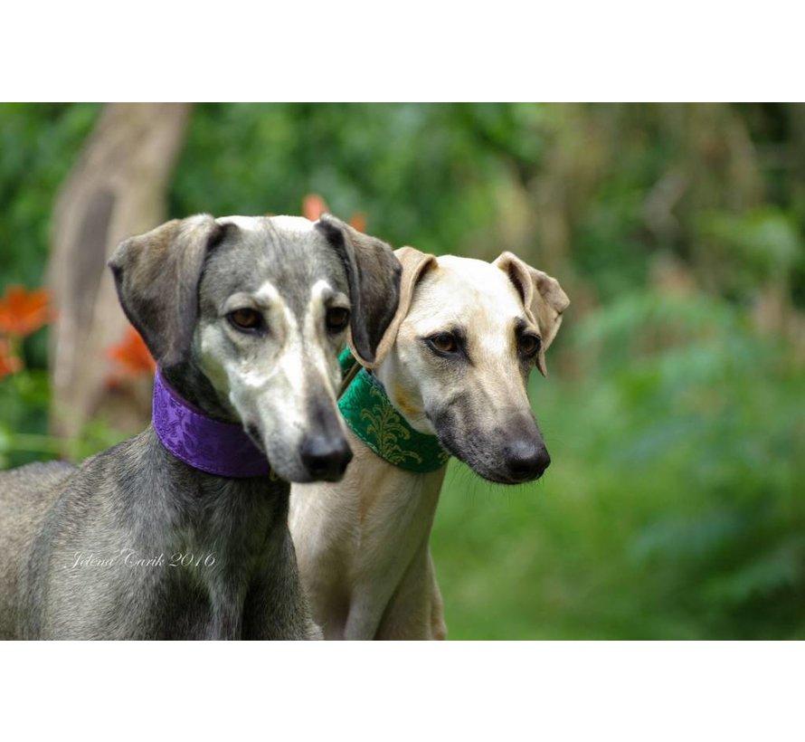 Martingale Dog Collar Brocade Green