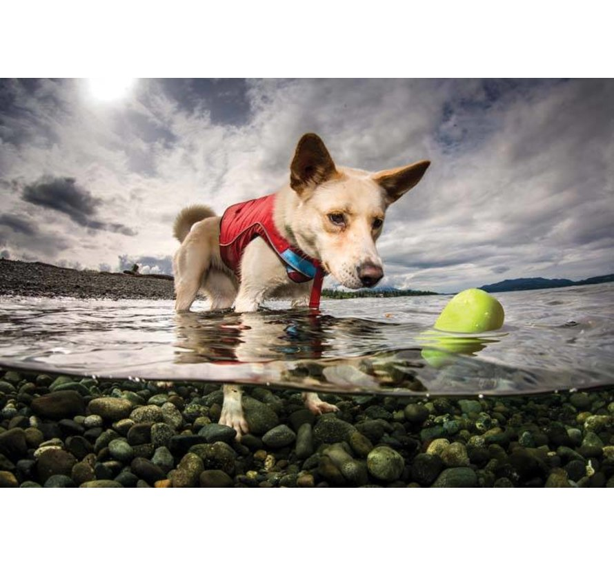 Dog Toy Skipping Stones