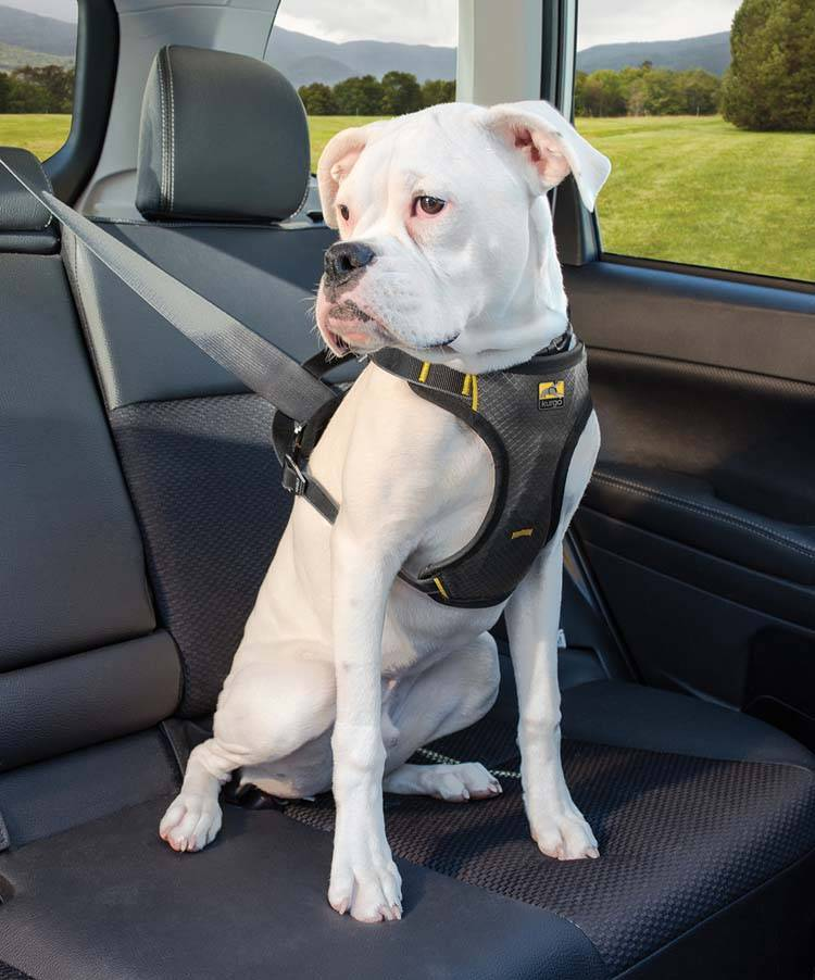 Hondentuig Impact Dog Car Harness kopen