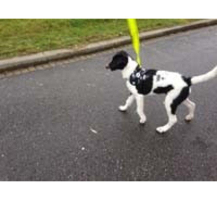 Survival dog harness Skull and Bones