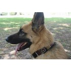 The Kenyan Collection Dog Collar Topi