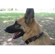 The Kenyan Collection Hondenhalsband Topi