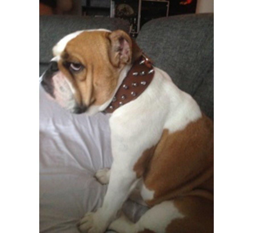 Dog Collar Savage Spikes Brown 45mm