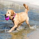 Rogz Dog Toy Pop Upz Pink