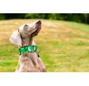 Barcelona Dogs Martingale Dog Collar Brocade Green
